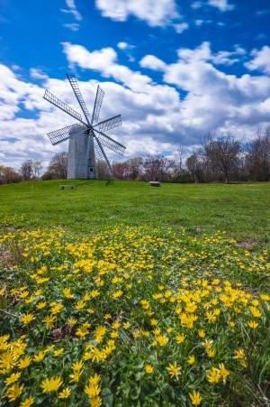daytimespringwindmill_IG_full-11-1
